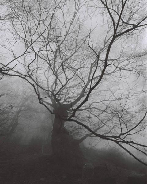 김미선, '아무도 그숲에 가지 않았다 4'. C-프린트, 40 x 50cm. 2014.